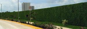 Follaje tipo hiedra para muro barda y 0 reja posot class for Muros verdes naturales