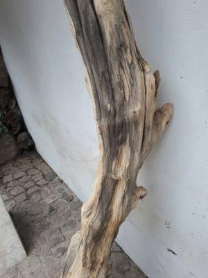 Tronco Decorativo. Madera De Teca. 220cm.