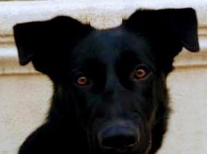 Hermoso perrito busca hogar