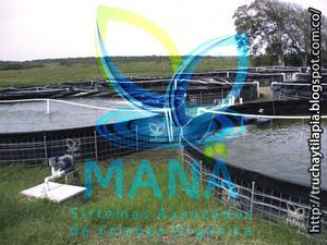 Tanques HDPE Para La Cría De Peces Orgánicos