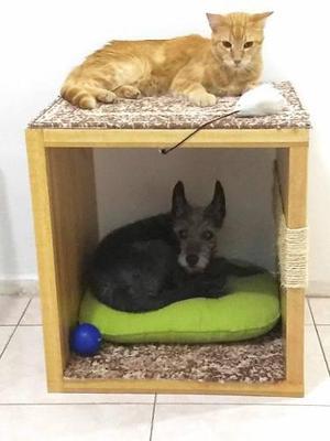 Cama Rascador De Madera Para Gatos O Cama P/perros Pequeños