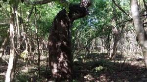 Terreno en Chemax Yucatan con cenotes