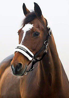 Cabezada Y Paseador P/caballo Marca Horze Color Negro