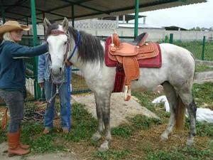 Montura Texana (con Cabezada Y Frenos)