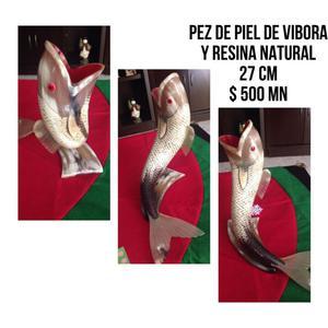 PEZ PIEL DE VIBORA