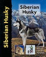 Siberian Husky L.winslette