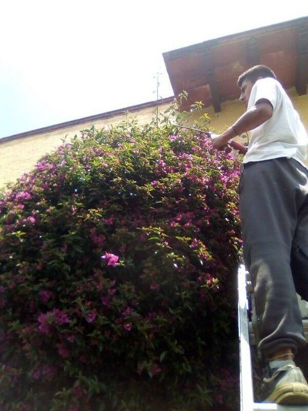 Jardinería y decoración en interiores y exteriores