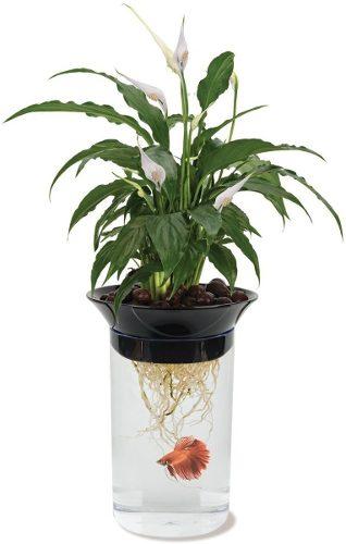 Acuario Para Pez Beta Permite Plantar Flores Incluye Envío