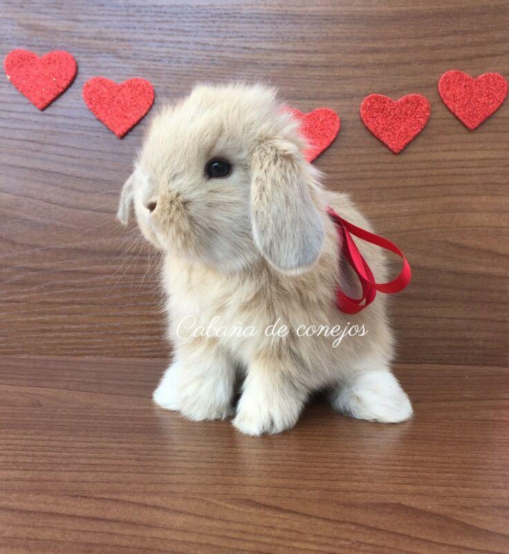 Conejos para el 14 de febrero
