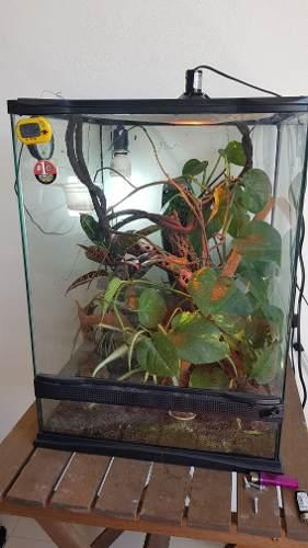 Terrario Para Reptiles Clima Tropical Habitat Todo Equipado