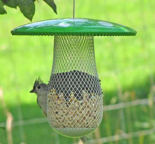 Comedero Alimentador Para Aves Y Pajaros Silvestres Y Ornato