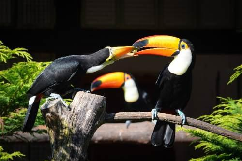 Masai Alimento Para Aves Exóticas Tucanes Tucanetas 10 Kg