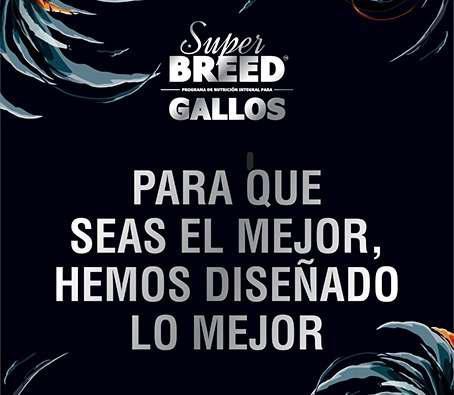 Super Breed Gallos Etapa Entrenamiento 25kg