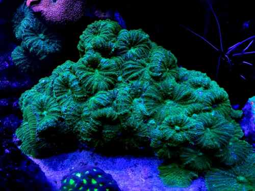 Pack X $ Hongos Verdes Corales Marinos