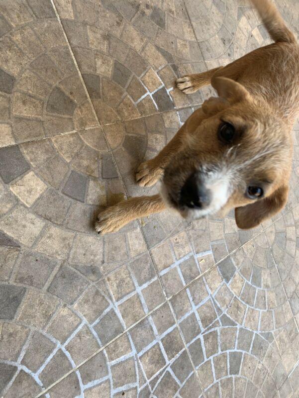Se busca hogar para dos cachorros