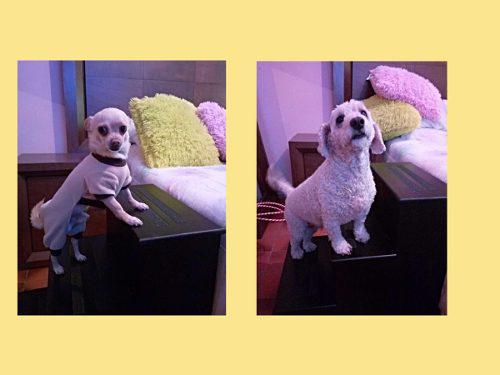 Escaleras De Madera Para Perros Y Otras Mascotas
