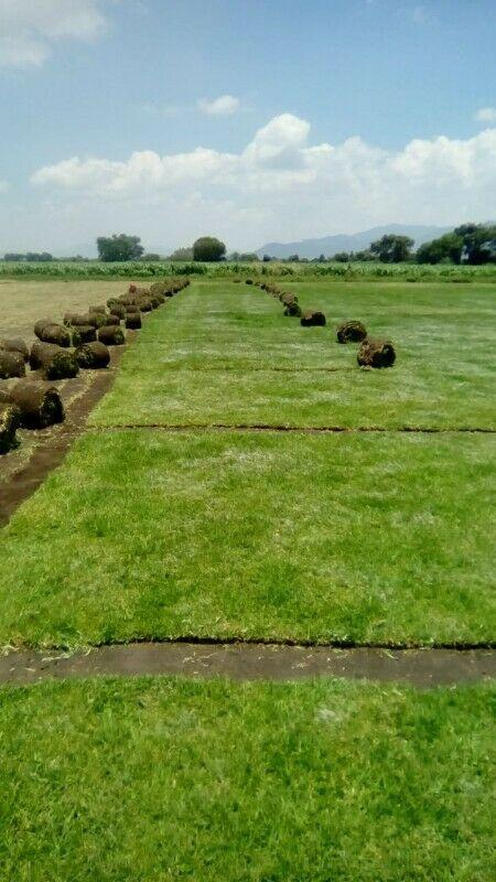 Venta de pasto en rollo precio de mayoreo apartir de 500 mts