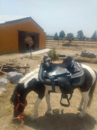 Caballos Ponys En Venta