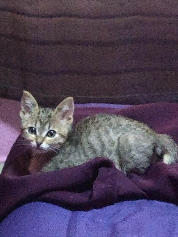 Gatito - Anuncio publicado por Azucena
