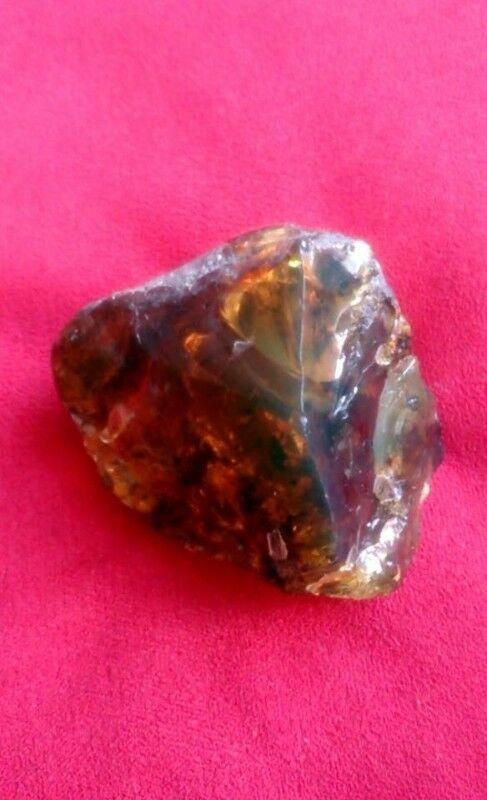 Piedra de Ambar Antigua Fosilizada Musgo y Plantas