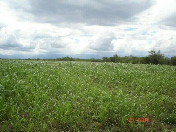 Venta de terreno en Montemorelos(San Agustín de los