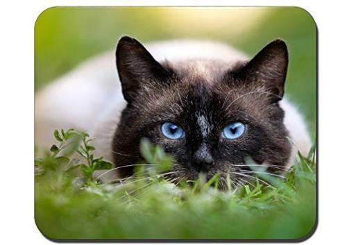 Gato De Ojos Azules Personalizados Del Rectángulo De Juego