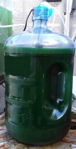 Spirulina Maxima (viva) 10l, Incluye 1kg De Alimento Rm6-osj