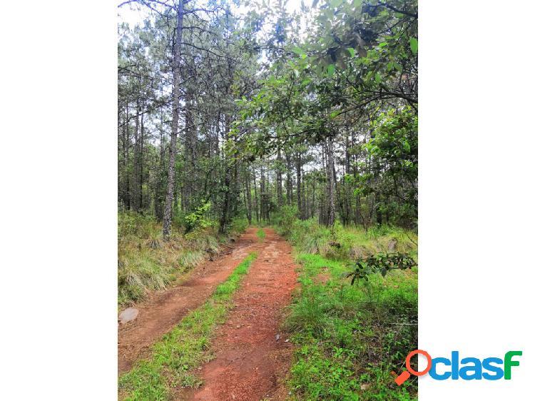 Venta de 42.1 hectáreas boscosas en Singuilucan