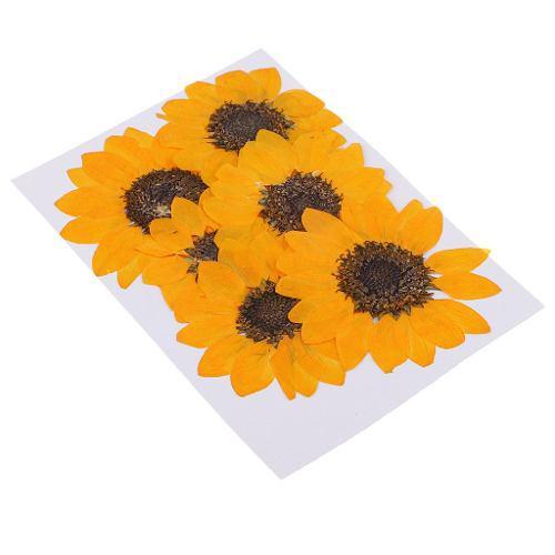 6 Piezas De Flores Naturales Reales Girasol Flores Secas Diy