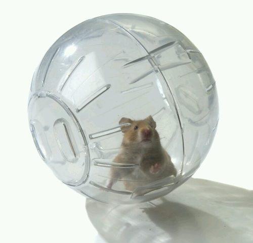 Esfera Bola Hamster Erizo Ratas Gde Lee´s 25.4 Cm Ler