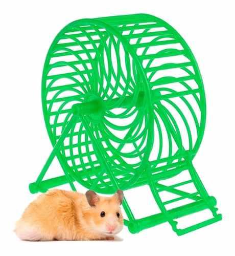 Rueda De Ejercicio Juguete Para Hamster Verde Q