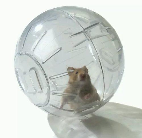 Bola Transparente Para Hamster Raton Erizo O Cuyo
