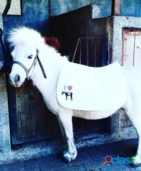 Renta de Ponys para Eventos