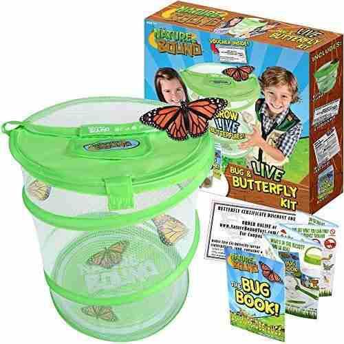 Set De Hábitat Para Insectos Y Mariposas Verde