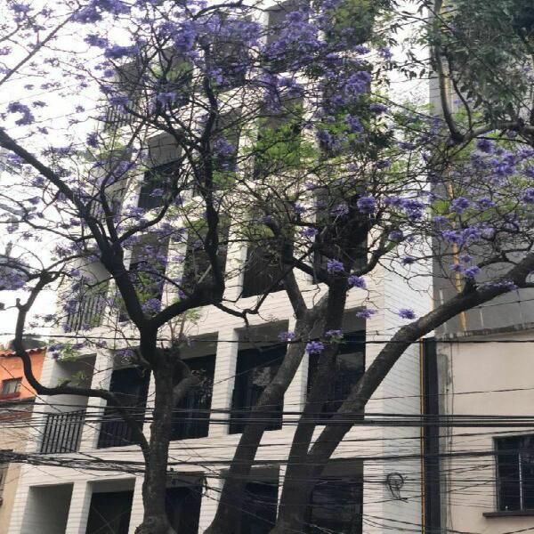 Departamento de Lujo en la Colonia Condesa, CDMX | Mexicali
