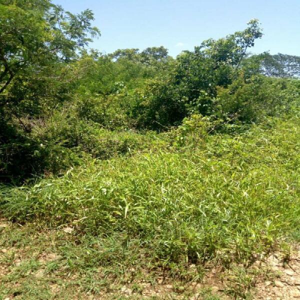 Terreno de 12 hectareas a la venta en Chichí Suárez