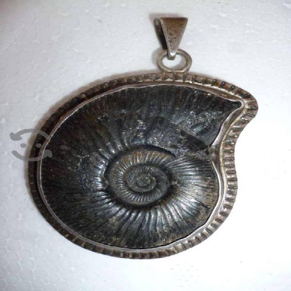 Dije Collar de Amonita Fósil