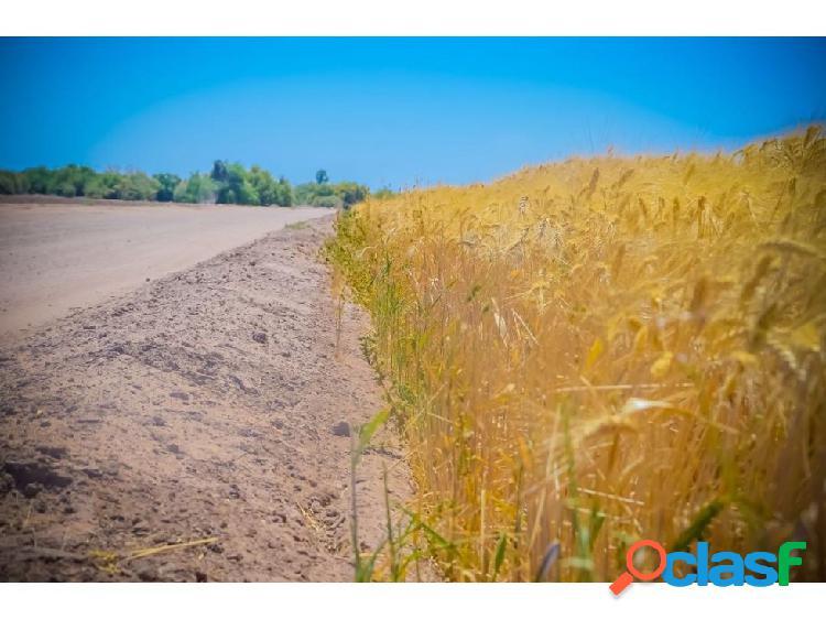 10 hectáreas de siembra con permiso de riego