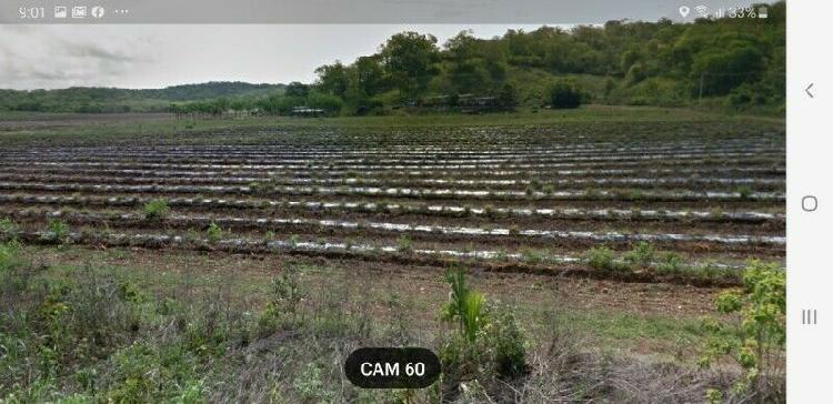 Terreno de 42 hectareas en Uayamon Campeche