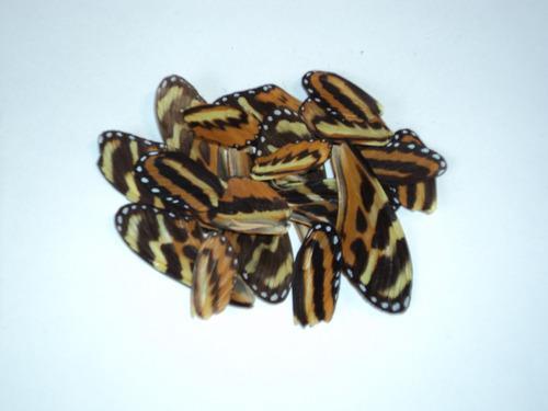 Alas De Mariposas Tigre. 20 Piezas