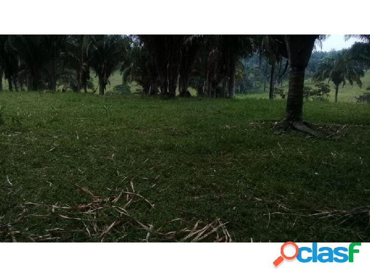 50 000 m2 de terreno en venta muy cerca de Reforma Chiapas